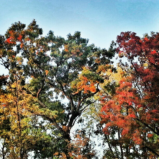 Falls a bit further along here then Seattle. #fall #minnetonka #minnesota #trees #color (Taken with Instagram at Minnetonka MN)