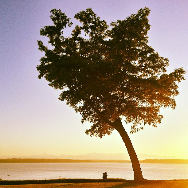 Photographer are work. #tree #sunset #photographer #photography #washington #metaphoto #pugetsound #water