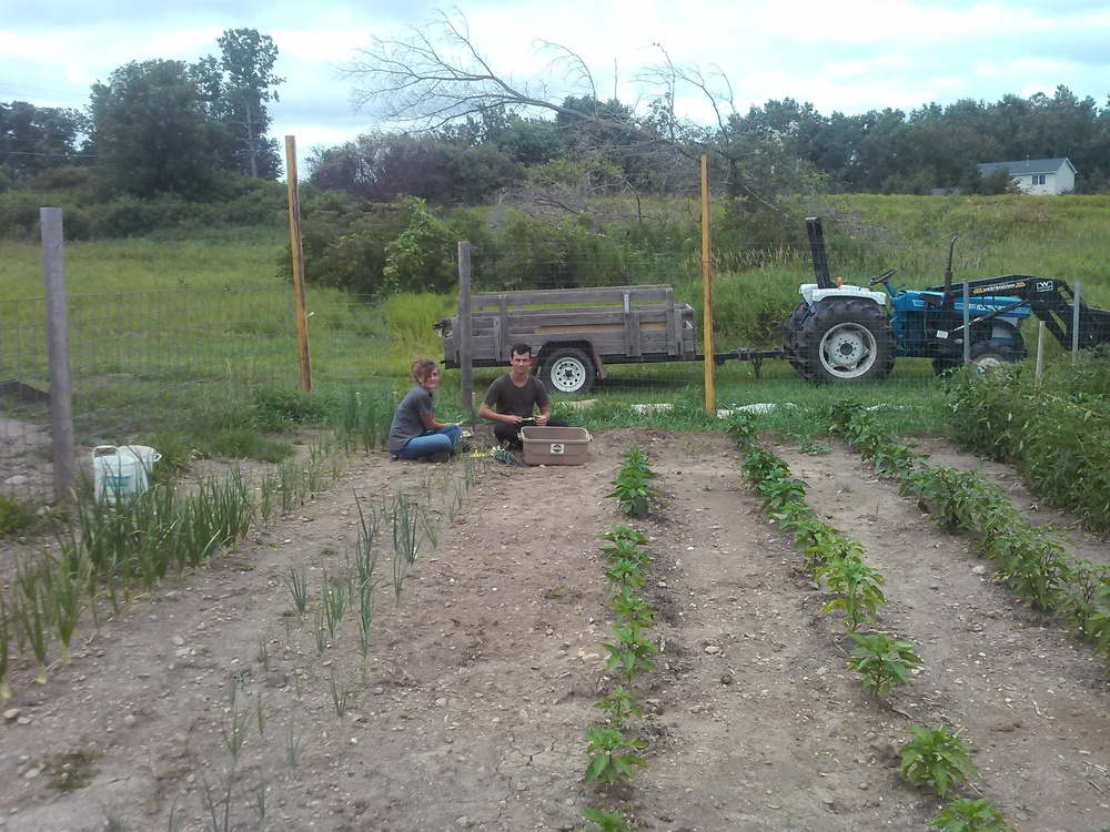 Kate and Martin harvesting green onions