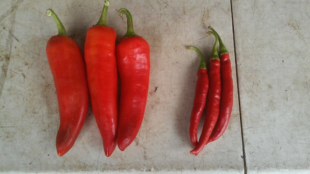 Sweet Red Peppers on the left, spicy Cayenne on the right