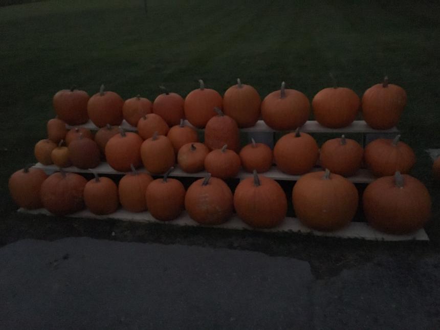 pumpkins.png