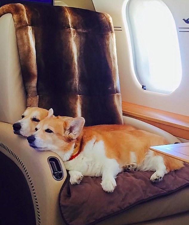corgs on a plane.jpg