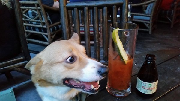 corg with bloody mary.jpg