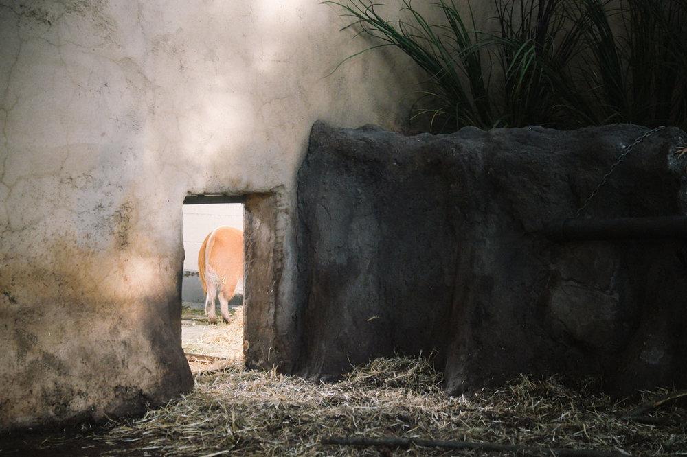 calgary-zoo-06.jpg