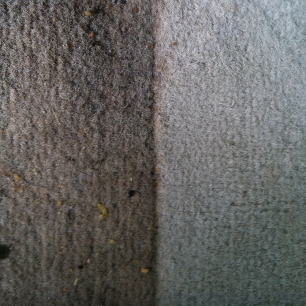 Carpet Restoration - Before and After: I think this picture speaks for itself.