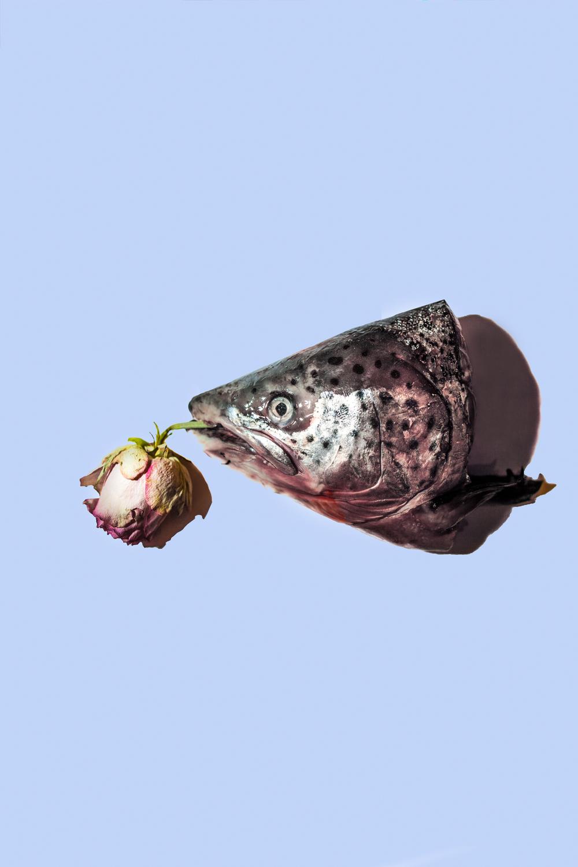 Gioia Zloczower Fish