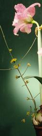 floral1.jpg