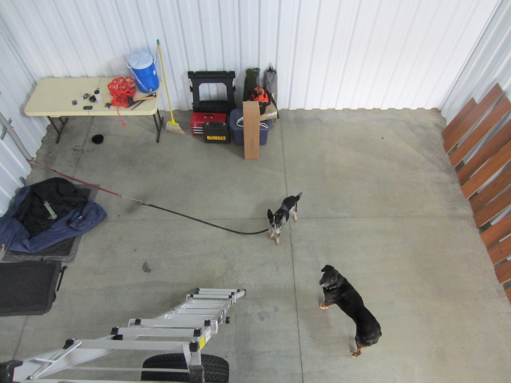The dogs hung out below waiting for us. Tyki, a dog we're fostering, is on the leash because the garage door is open.