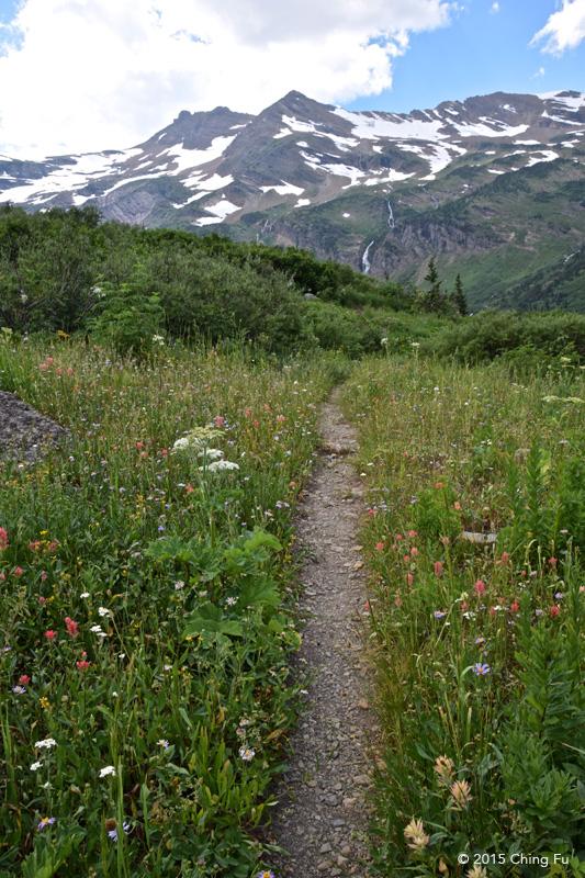 Abundant wildflowers.