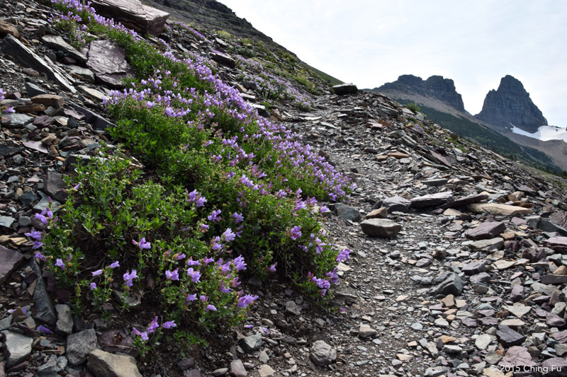 Wildflowers line the sides of the spur trail up to the Garden Wall.