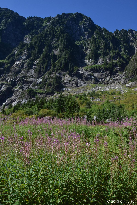 Abundant wildflowers
