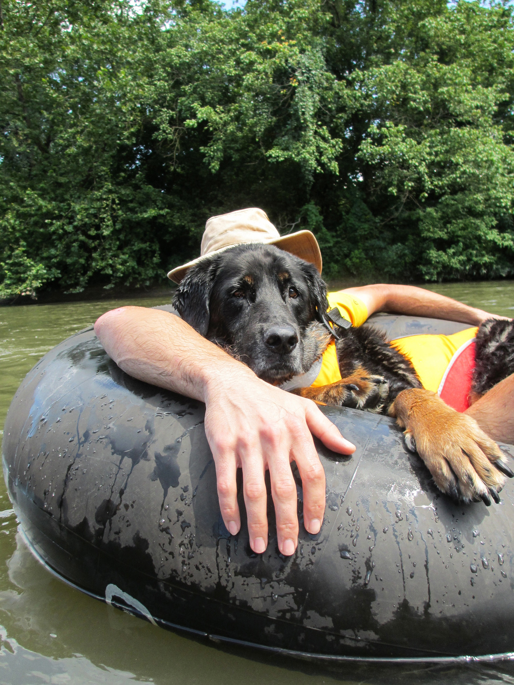 Tybee tubing down the French Broad River.