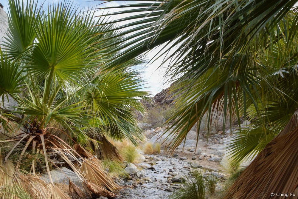 As true to the definition of an oasis, there was a running creek by the grove of palm trees.