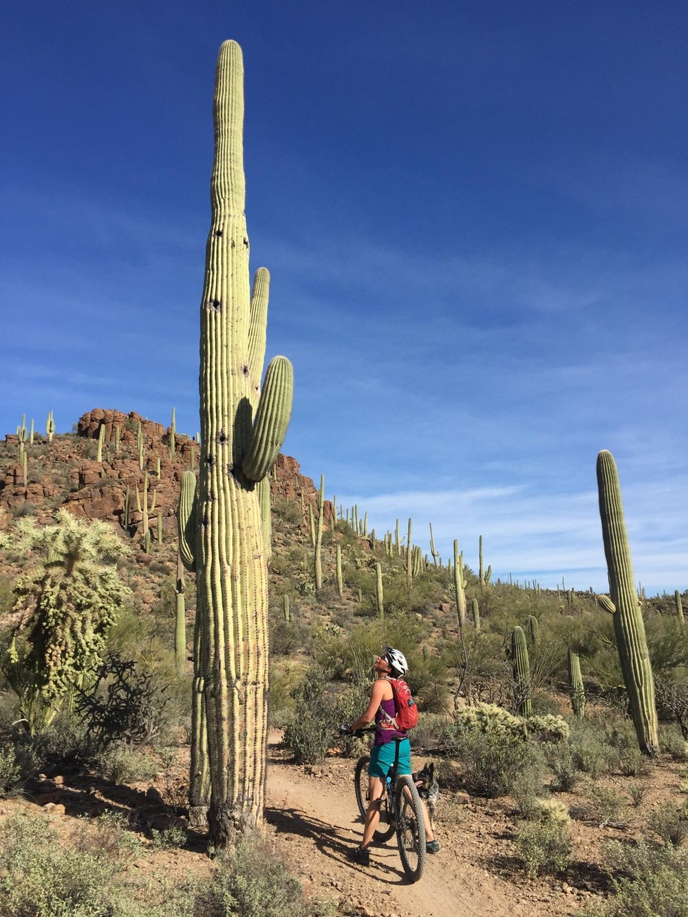 Mountain biking at Tucson Mountain Park.