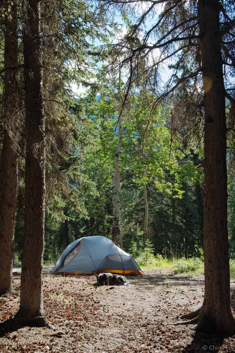 Tent camping in Carcross, Yukon.