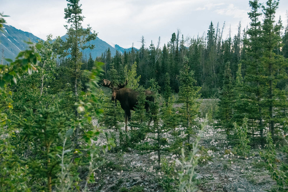 Our moose sighting.