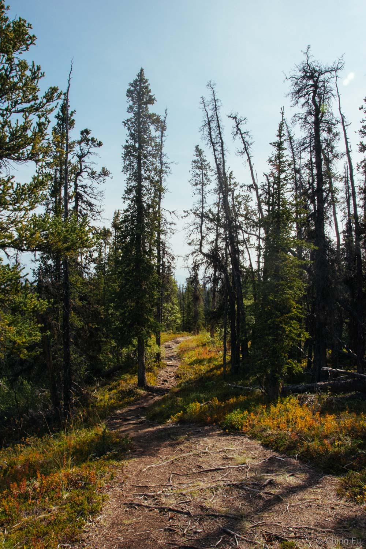 Auriol Trail