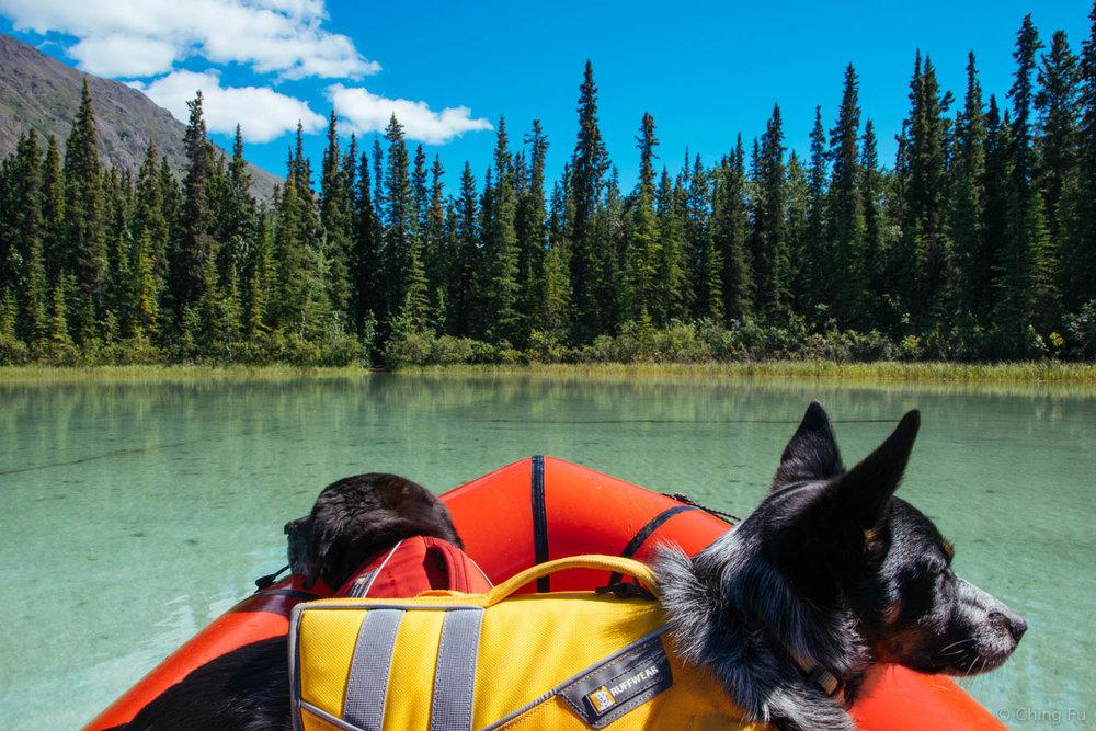 Tyki & Tybee in Yukon, Canada.