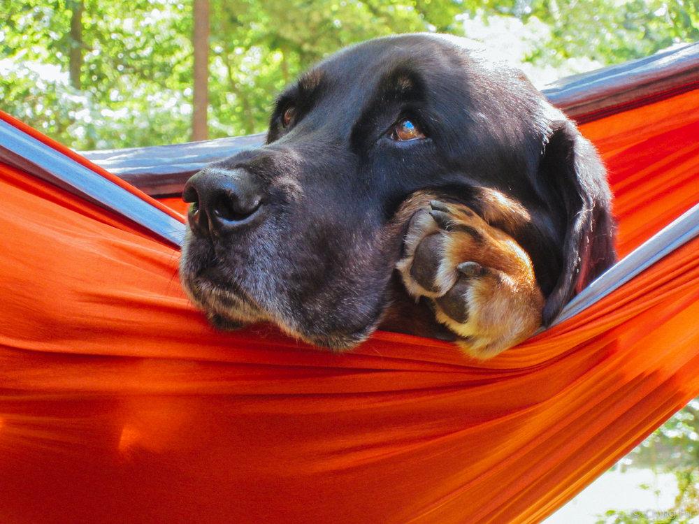 Tybee hammocking.
