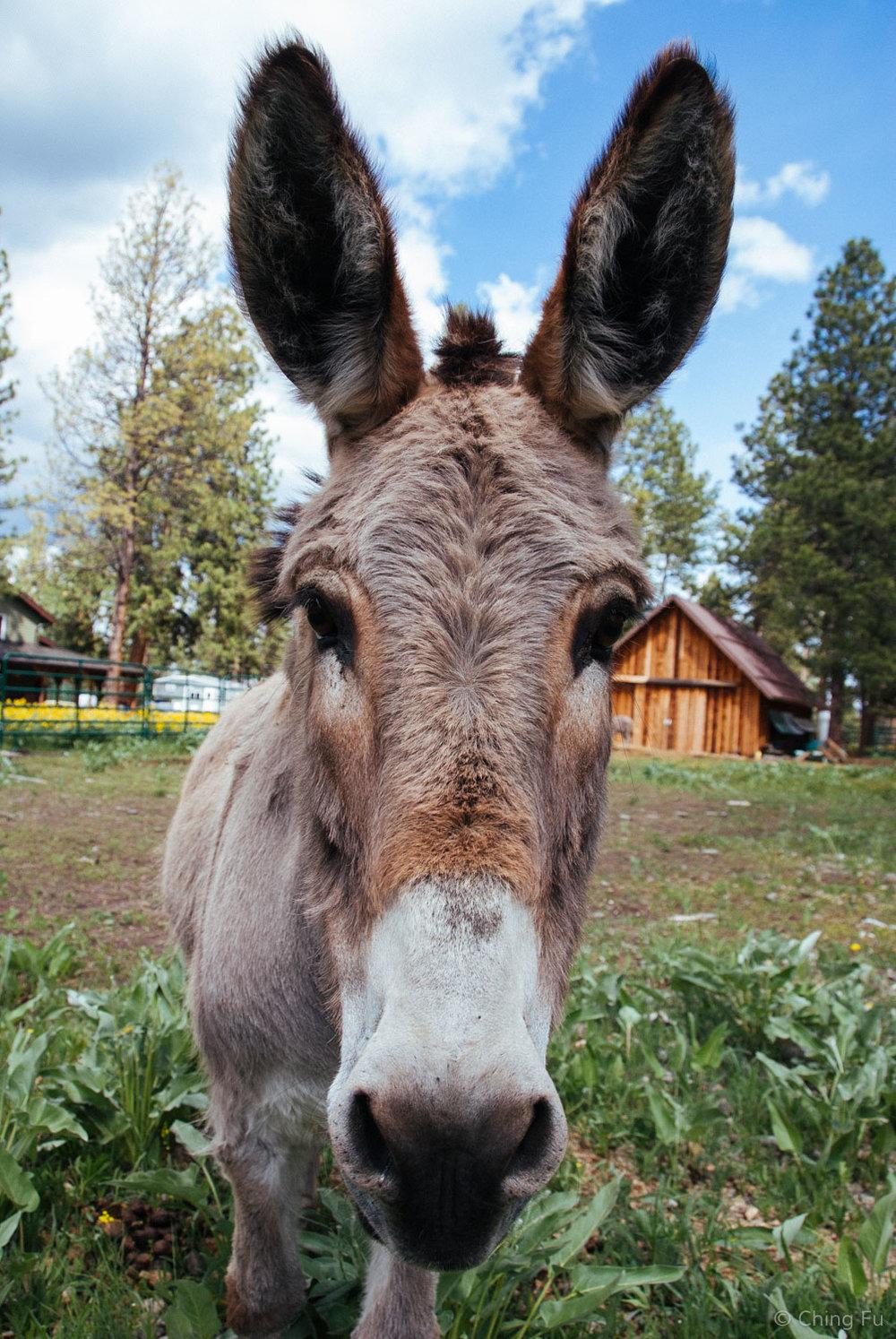 Montana the donkey.
