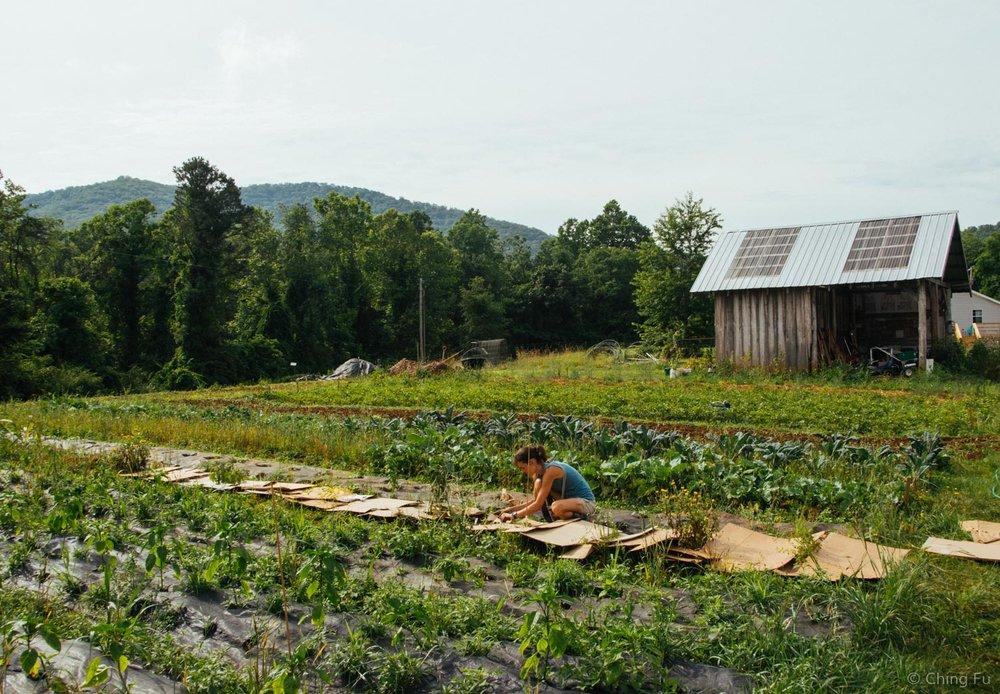 Garden at Whistlepig Farm.