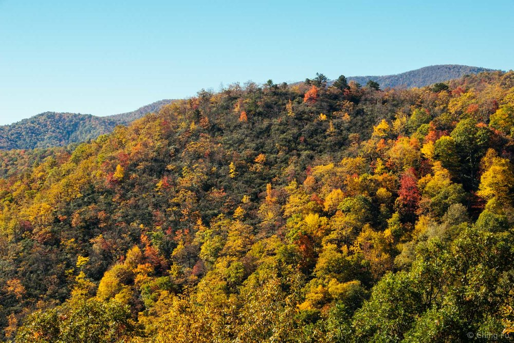 Fall colors in Asheville.