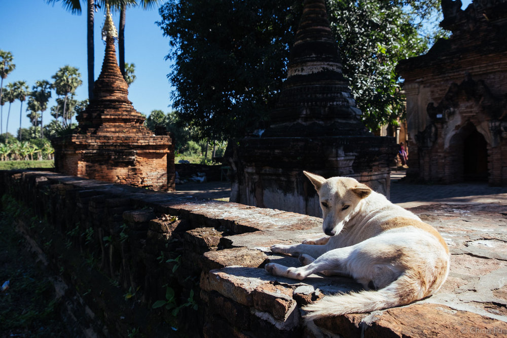 A stray dog sunning himself on the wall of Yadana Hsemee Pagoda Complex.