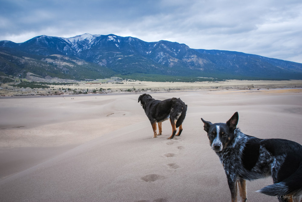 Tybee and Tyki at Great Sand Dunes National Park.