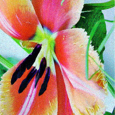 Inside a Parrot Tulip