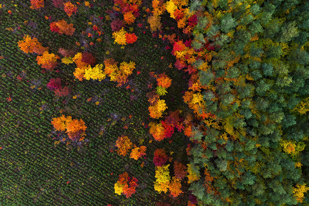 Kacper-Kowalski_SideEffects_Seasons_Autumn_#29.jpg