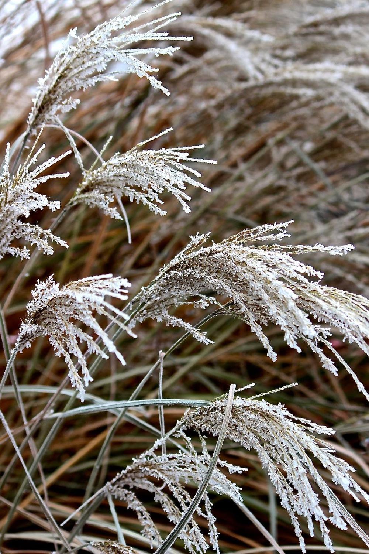 grassesfr..jpg