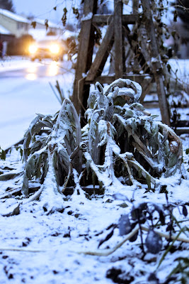victorysnowcardoon.jpg