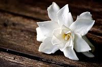 gardenia+table.jpg