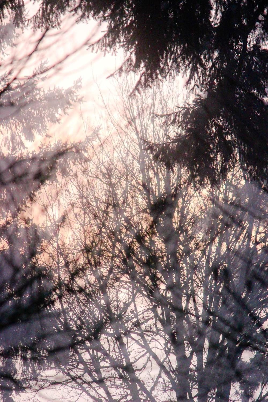 dawntrees.jpg