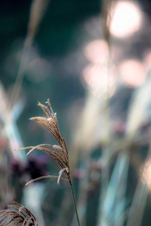 dawngrass.jpg