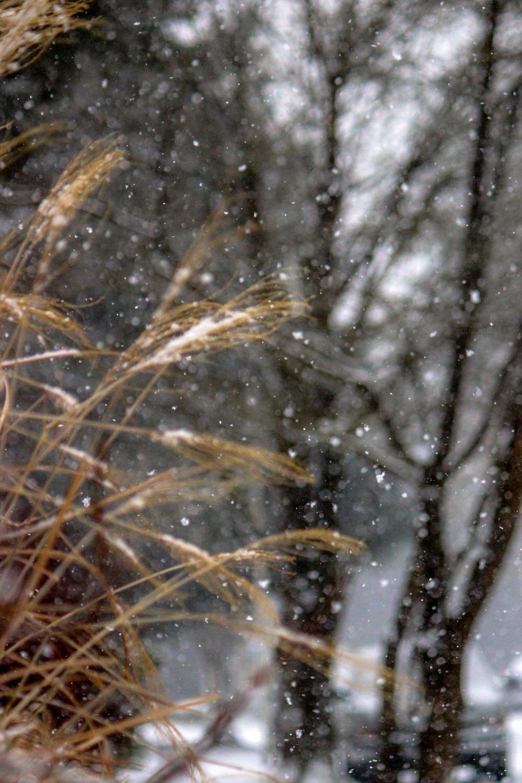 snowgrassstreet.jpg