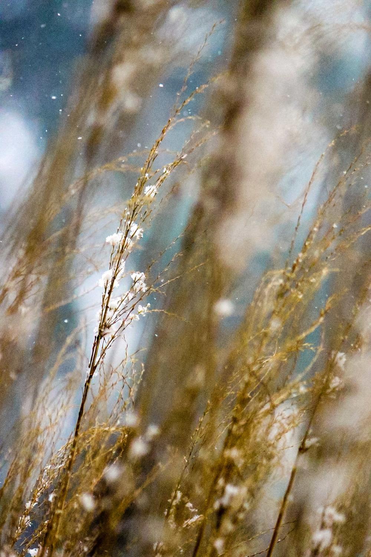 snowgrass1.jpg