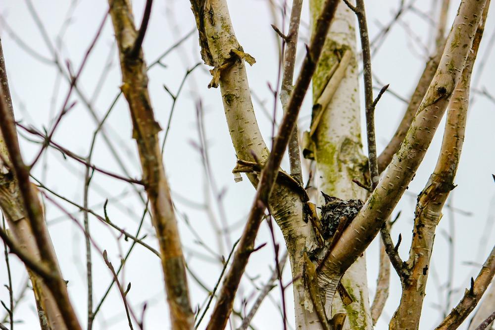 hummingbirdnest.jpg