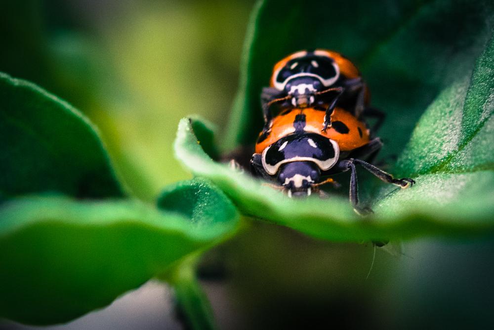 ladybugphotobomb5555.jpg