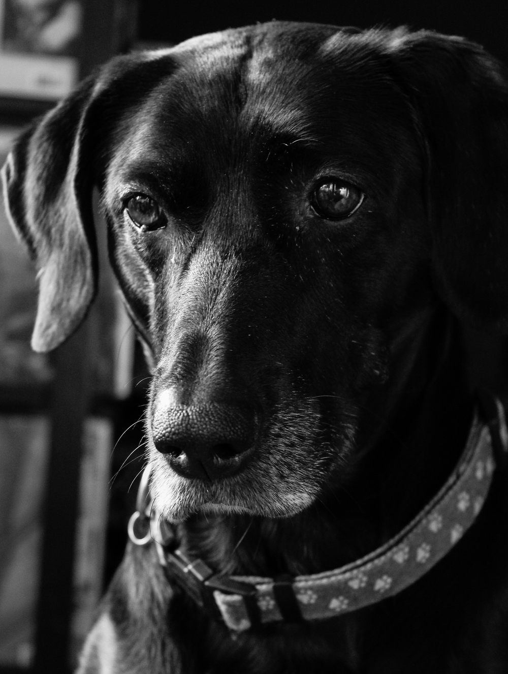 sadie portrait.jpg