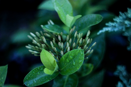 nature-plant-leaves-green-medium.jpg