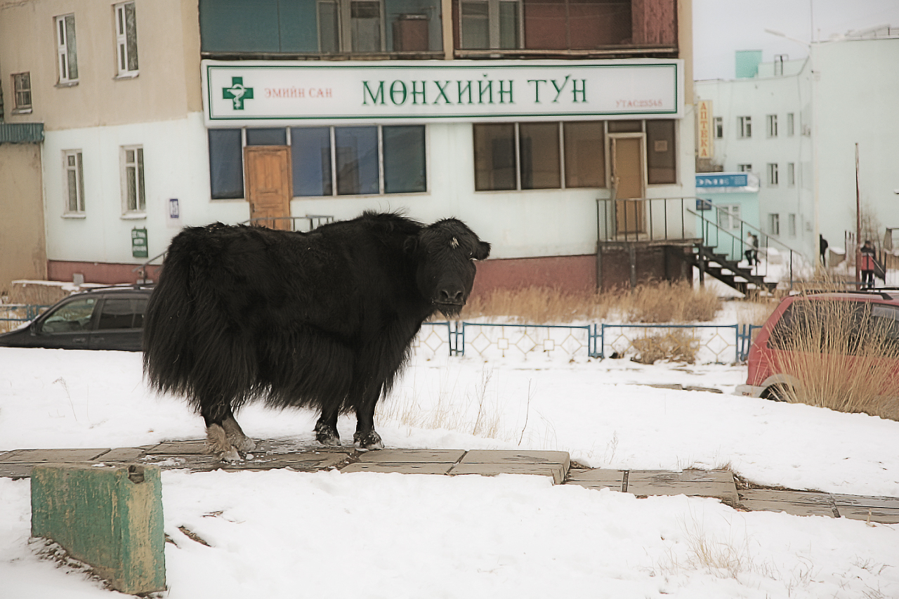 I enjoy seeing the contrast of old and new in this developing country.  I mean where else could a yak stand in front of a pharmacy?