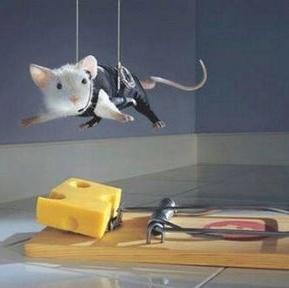 mousetrap1.jpg