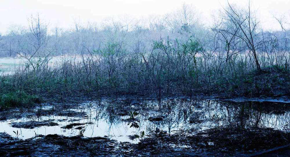'Blue Swamp Waning' from the series imaginary wars. c-print in oak frame, 20 x 37 inches