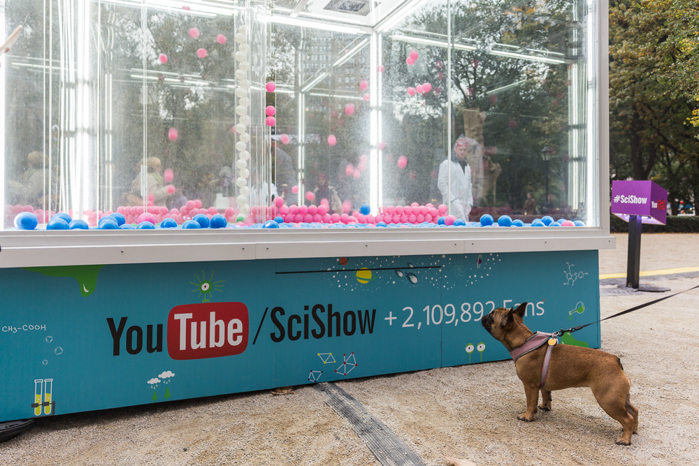 The dogs are fascinated by the YouTube/ SciShow energy demonstrations and want to play.