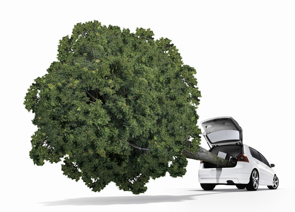 VW carbon neutral project.  Tree photographed by Harlan Erskine.