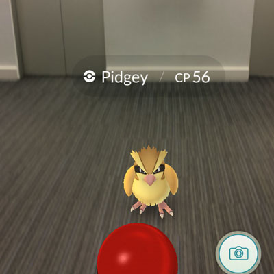 Pidgey in the office elevator bank