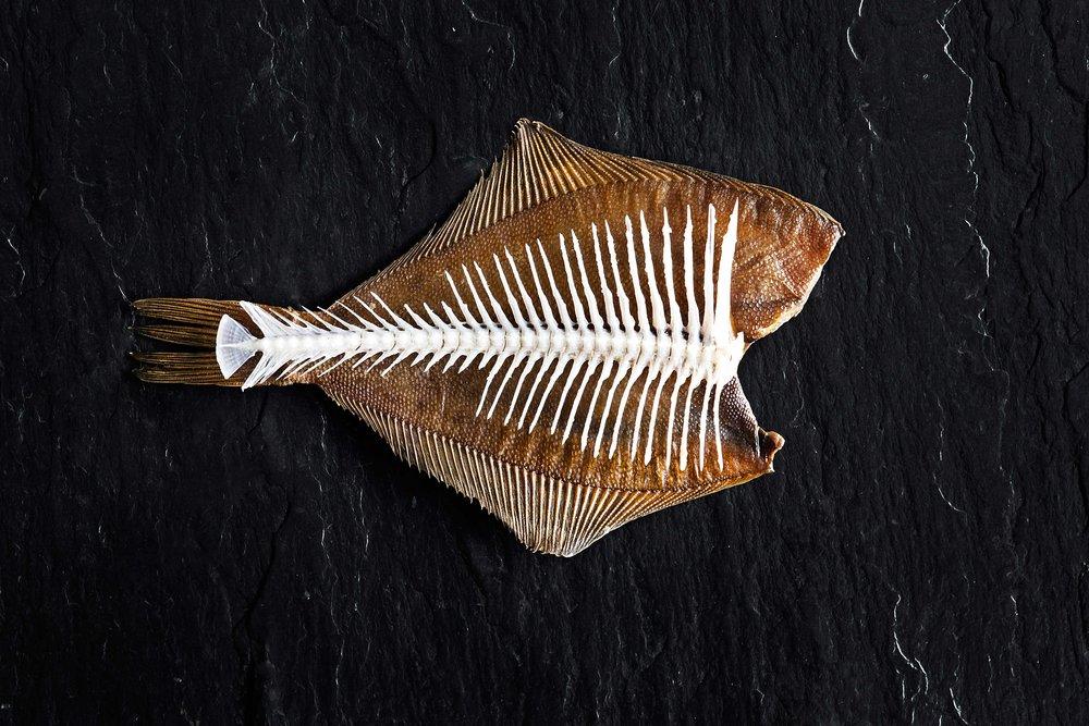 Fish // Eti'kede