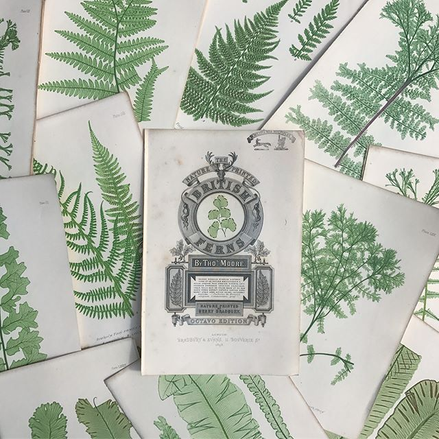 🌿🌿🌿 F E R N  S A L E 🌿🌿🌿 🌿_____________________________________________________________ 🌱🌱The holy grail of fern books 1st ed. 1859 🌱 🌱🌱🌱Henry Bradbury 'Nature-Printed British Ferns 🌱🌱_____________________________________________________________🌱🌱NOW: £25 each! 🌱🌱(usually £40 each) 🌱🌱Build a wall of ferns for full visual effect, they look great with or without mounts in oak, gilt, black and white frames. ___________________________________________________________🌱🌱PM for more information and photographs 🌱🌱 🌱🌱🌱F R E E  U K  E X P R E S S  D E L I V E R Y 🌱🌱 _____________________________________________________________ #henrybradbury #natureprinted #fern #ferns #britishferns #fernwall #wallofferns #englishferns #pressedferns #💚 #botanical #botanicalart #thomasmoore #fernery #🌿 #🌱