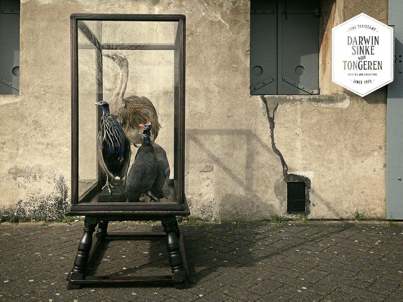 Case-Birds_1.jpg